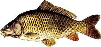 """<p style='text-align: left;'>Zbog velikog broja upita od strane članova udruge,uprava RUHB """"Šaran""""donijela je odluku o prodaji godišnjih dozvola za ribolov na jezeru Stoppeldorf u 2013.godini po cijeni od 600 kn.</p>"""