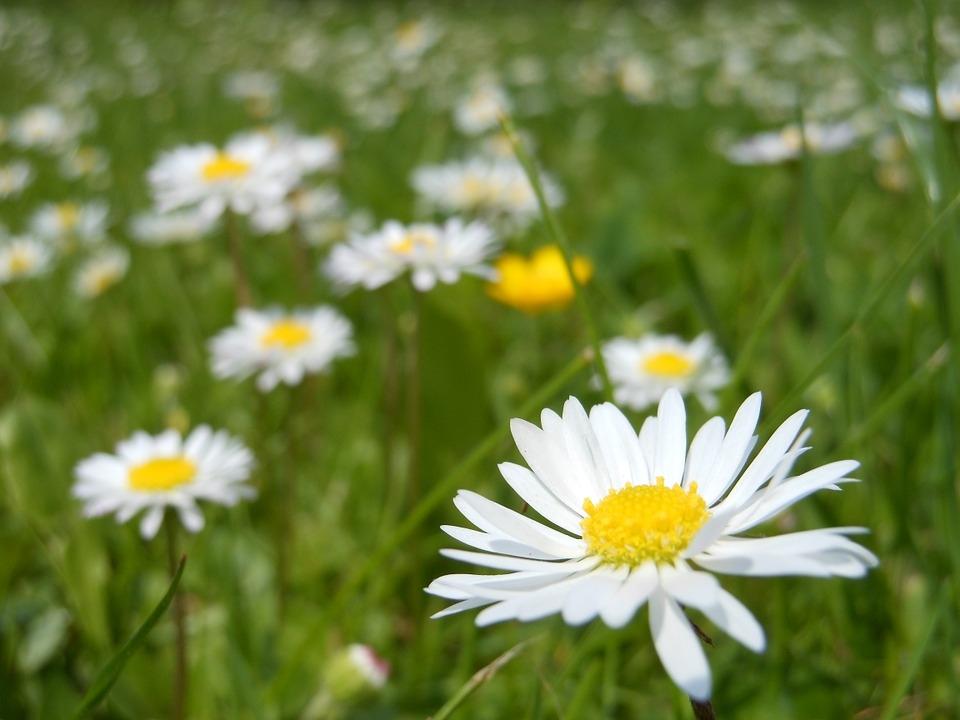 <p>S ponedjeljkom, 20. ožujka stiže nam proljeće, najljepše godišnje doba. Kako bi se taj dan i obilježio na prigodan način, <strong>općinski će načelnik zajedno sa svojim suradnicima ispred Centra za kulturu u 10:30 sati dijeliti mještanima sadnice proljetnog cvijeća.</strong></p>