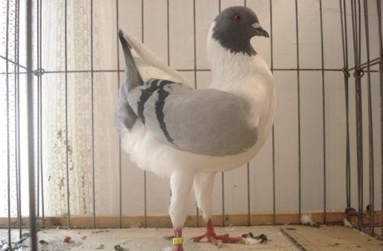 """<p>Udruga za uzgoj malih životinja """"FLORENTINAC"""" i ove godine po 33. put održat će izložbu malih životinja u Čepinu.</p>"""